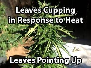 symptoms and solutions of moisture stress on cannabis plants best 25 heat stress ideas on care tips and facts