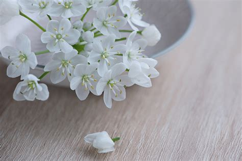 White Flowers by Free Photo Flower Flowers White Free Image On Pixabay