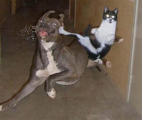 Hit The Floor Next Thing You Know - alface com caf 201 os maiores sonhos e vontades de um gato