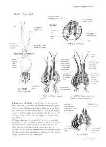 Steunk Table L Bulb Reproduction