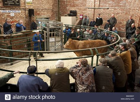 livestock auction leek auction mart auction beef livestock market market