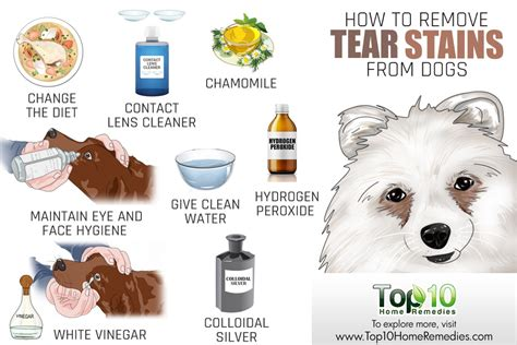 puppy tear stains how to remove your s tear stains top 10 home remedies