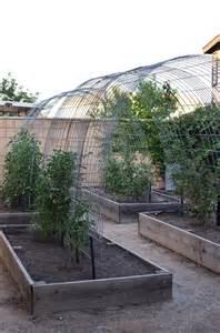 Arched Garden Trellis Panels Best 25 Cattle Panels Ideas On Diy Greenhouse