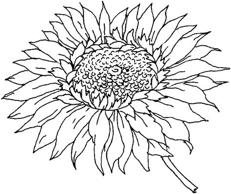 abstract sunflower coloring page all flower coloring pages