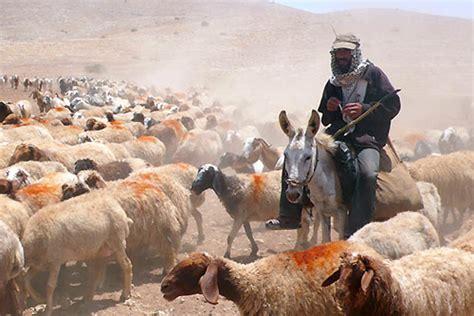 imagenes sobre la vida nomada tribus del desierto beduinos promotrip
