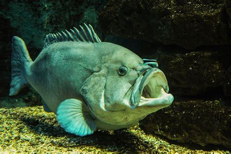 bid fish big fish domain free photos for