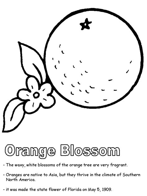 image gallery orange blossom coloring page