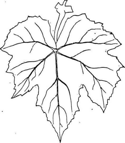 printable vine leaves grape leaf template printable google search crosses