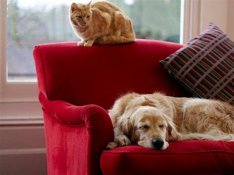 houses for rent that allow dogs tenant demand for pet friendly houses rising socialpropertyselling com