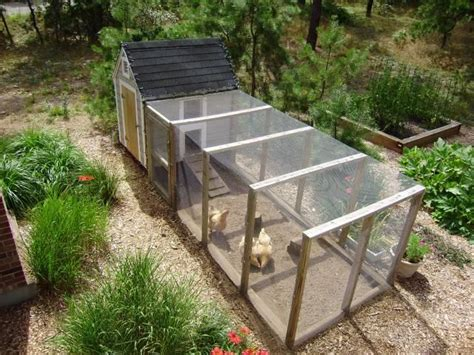 backyard chickens for sale 1000 ideas about buff orpington on pinterest hens