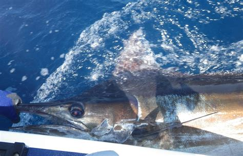 bluewater boats durban blue water charters south africa fishing charters guides