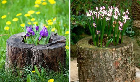 Planters Pointe Hoa by 12 Tree Stumps Turned Into Beautiful Flower Planters