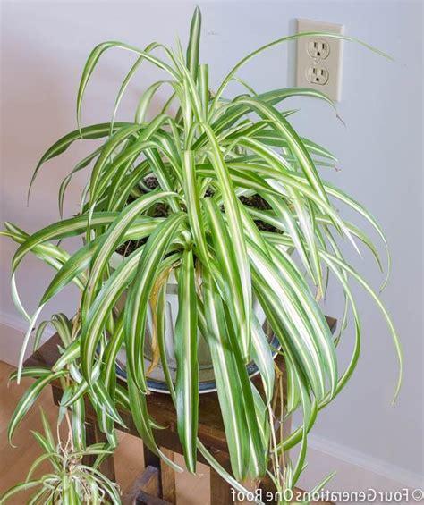 common american house plants common houseplants related keywords common houseplants keywords keywordsking