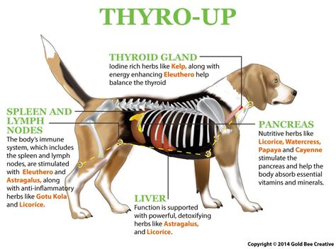 symptoms of thyroid problems in dogs hypothyroidism symptoms in dogs 61114 notefolio