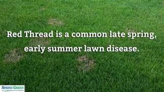 summer lawn care tips summer lawn care awesome summer lawn care with summer lawn care lawn care with summer with