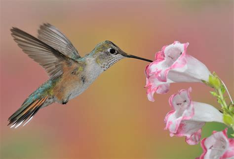 the hummingbird nature s marvel leadership insight blog
