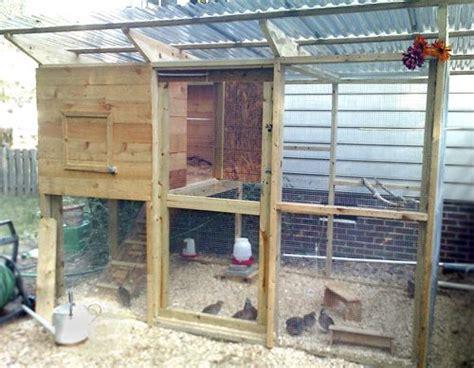 quail chickens chukar pheasants all share this backyard
