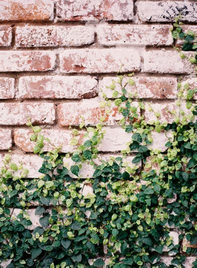 poppies posies garden vines brick wall drawing ivy wall