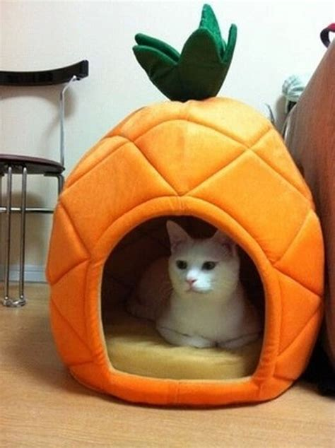 cute cat beds cute pineapple pet kennel warm pet bed house small dog cat bed puppy bed house ebay