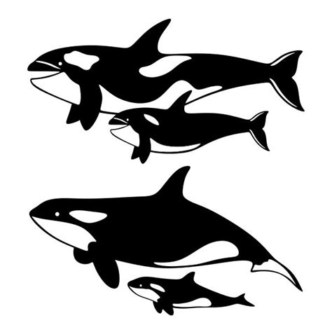 And Baby Whale Cuttable Design - 333 best images about animal silhouettes vectors