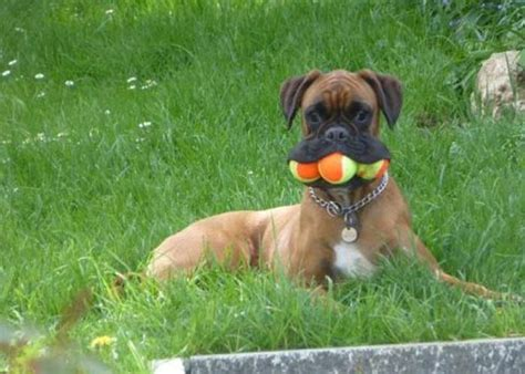 tennis balls for dogs tennis balls for dogs on sale at best prices in ireland