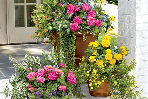 container garden ideas spectacular container gardening ideas southern living