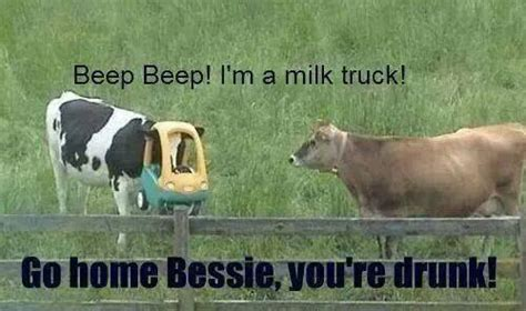 Funny Cow Memes - fridayfrivolity cow funnies funny and cute cow memes