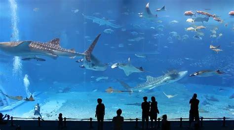 aquascape jember share aquarium aquascape luar biasa dijamin terkesima