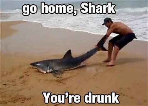 Funny Shark Memes - funny go home youre drunk meme 8 dump a day
