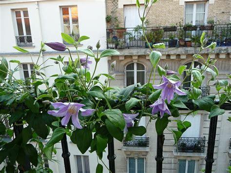 Plante Balcon Nord by Plante Balcon Sud Plantes Balcon Plein Sud Fleurs Balcon