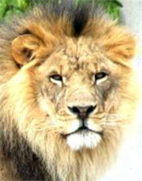 kxipofficial our lions here is the list of our retained where do lions live about lions online biology dictionary