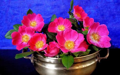 imagenes bonitas de rosas de cumpleaños fotos de lindas flores fotos bonitas de amor im 225 genes