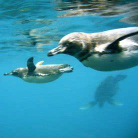 Penguin Light Isabela Island Galapagos