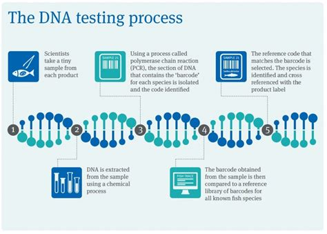 test dna how dna testing works