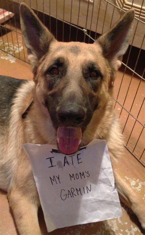 www dogs garmin