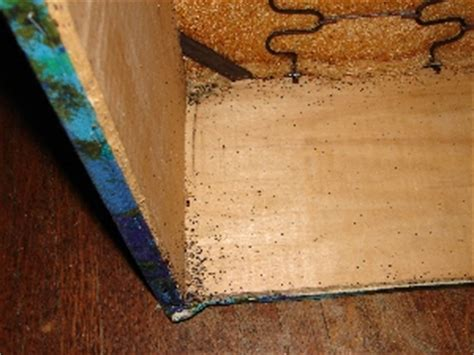 where do bed bugs hide in couches fmc global specialty solutions gt bed bugs gt property