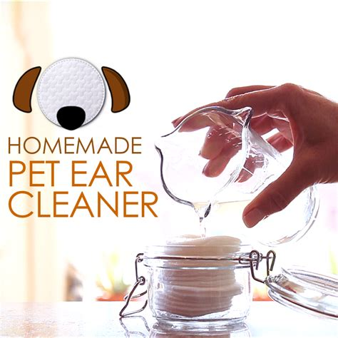 diy ear cleaner diy ear cleaner for pets planet paws