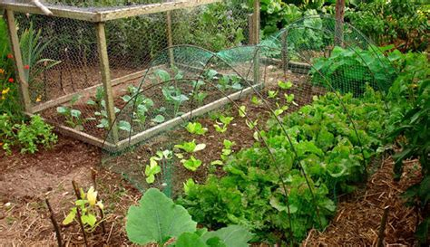 seven steps to an organic garden the basic steps to make anyone a green thumb gardener books 7 steps to create a permaculture garden hobby farms