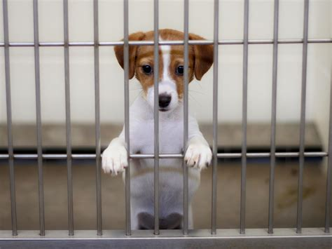 california    state  sell  rescued