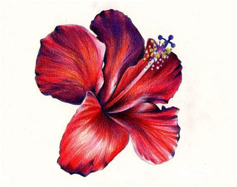 libro flowers in colored pencil colored pencil drawing of flower google search art colored pencils google