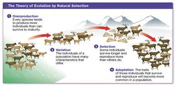 Image result for 4 reasons that natural selection occurs