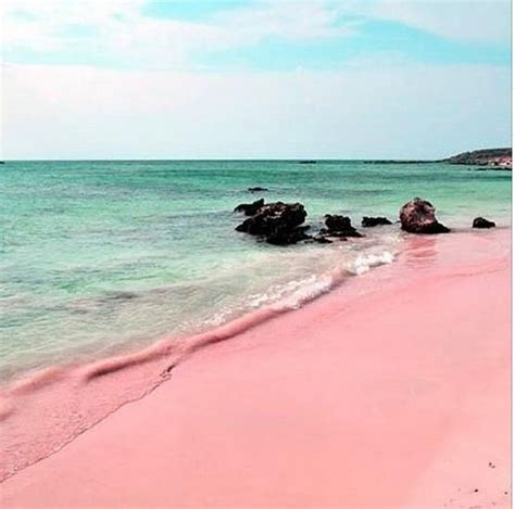 pink sand beach 25 best ideas about pink sand on pinterest pink sand