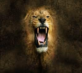 lion wallpaper free download