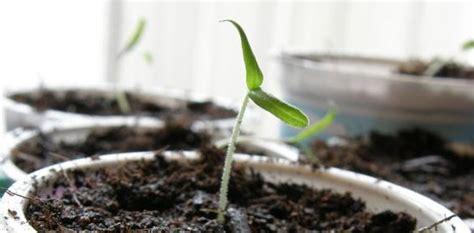 garten 1x1 das kleine 1x1 der gem 252 sepflanzenvorzucht willkommen auf
