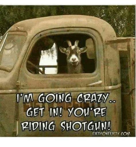 Going Crazy Meme - i m going crazy get in you re riding shotgun crazy