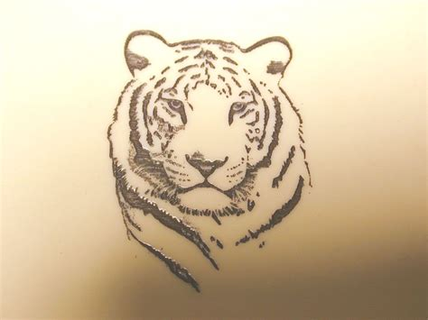simple tiger tattoo white tiger tatted up white tiger