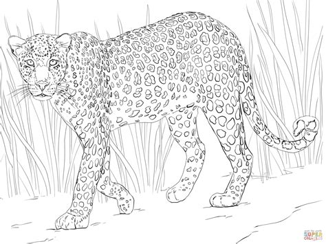 snow tiger coloring page african leopard coloring page free printable coloring pages