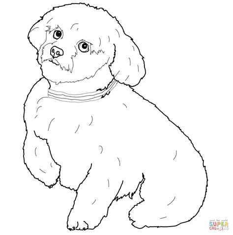 coloring pages of maltese puppies short hair maltese dog coloring page free printable