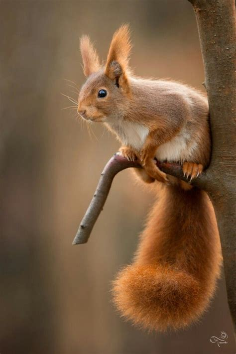 well the squirrels are back commercial script what do squirrels like to eat djur roliga djurbilder