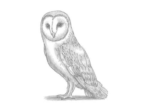 Barn Owl Animalstodraw Barn Owl Drawing
